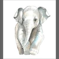 akwarela- młody słonik