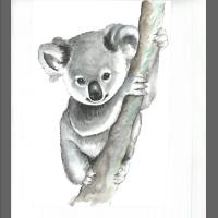 akwarela- miś koala